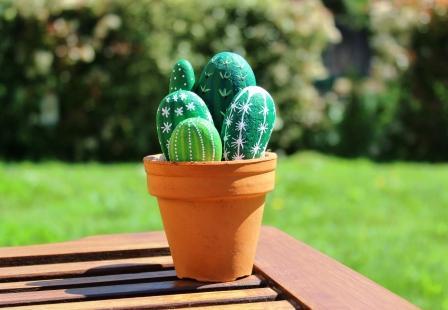 Des cactus qui ne piquent pas !