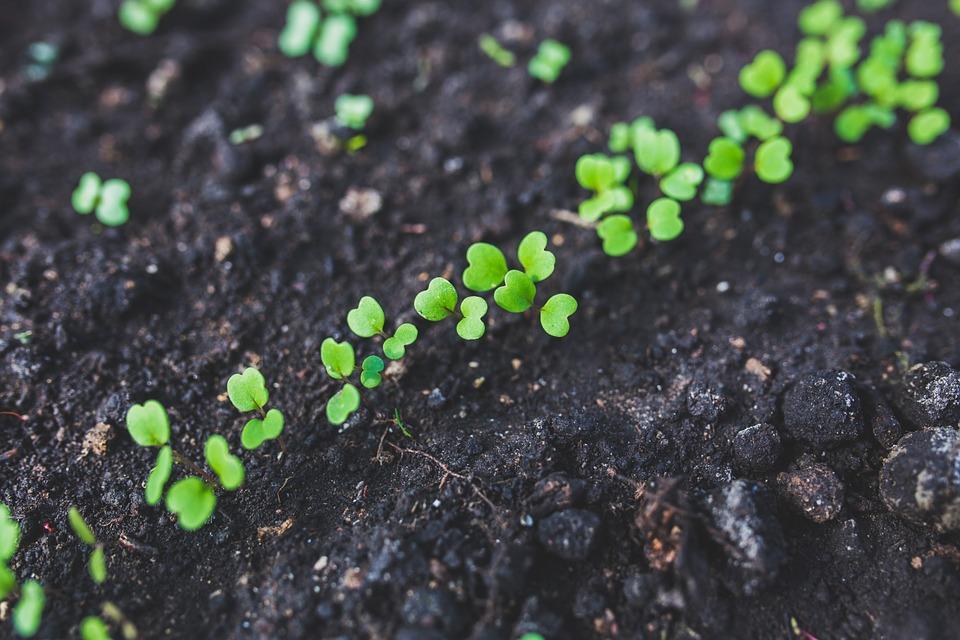 Que semer au potager durant les mois d'été?
